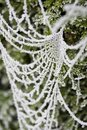 Free Frozen Spiderweb Stock Photo - 15948430