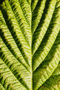 Free Green Leaf Closeup Royalty Free Stock Photos - 15949568