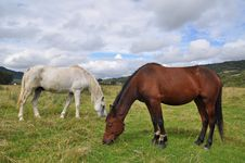 Free Horses On A Summer Pasture. Royalty Free Stock Image - 15941016