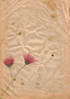 Old Paper With Chrysanthemum, Royalty Free Stock Photo