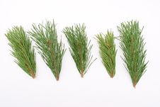 Free Pine Branches Stock Photos - 15944233