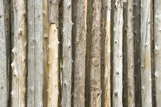 Bare Tree Trunk Royalty Free Stock Photography