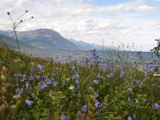 Free Norwegian Fjord Seen From A Flowery Meadow Royalty Free Stock Images - 15944829