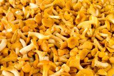 Free Chanterelle Mushroom Stock Image - 15944861