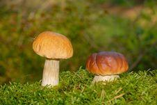 Free Mushroom Stock Image - 15946441