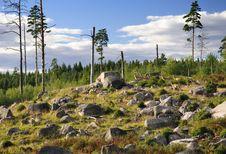 Free Swedish Group Of Deers Stock Photo - 15946660