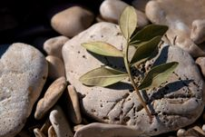Free Small Olive Branch Stock Photos - 15947513