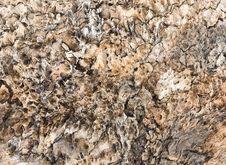 Free Closeup Of Textured Tree Bark Stock Photos - 15947703