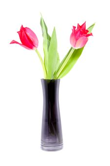 Free Two Tulips In A Black Vase Royalty Free Stock Image - 15949186