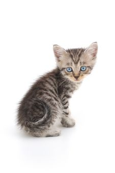 Free Kitten On A White Background Royalty Free Stock Photos - 15949608