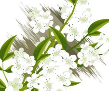 Free Blossoms Illustration Royalty Free Stock Photography - 15951767