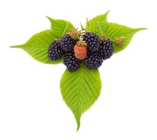 Free Close-up Ripe Blackberries On Leaves Stock Image - 15952861