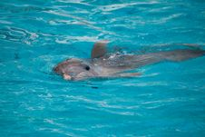 Free Dolphin Swimming In Water Stock Photo - 15952970