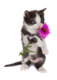 Free Kitten Hold Flowers Royalty Free Stock Images - 15953069