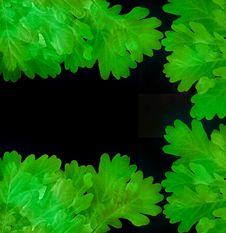 Free Oak Leaves On Black Stock Photos - 15953813