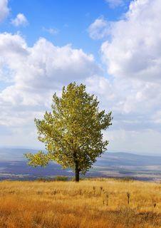 Free Autumn Tree Royalty Free Stock Photography - 15953847