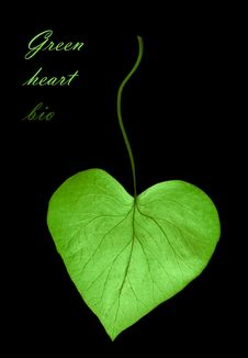 Free Heart From Leaf - Bio Concept Stock Images - 15953874