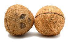 Free Coconut Stock Image - 15956231