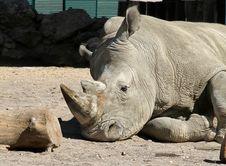 Free Rhinoceros Royalty Free Stock Photo - 15956425