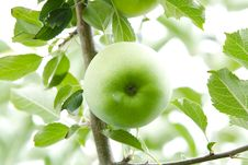 Free Green Apple. Close Up. Royalty Free Stock Image - 15956646