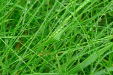 Free Wet Grass Leafes Royalty Free Stock Photo - 15956685