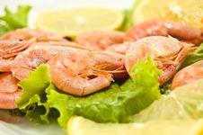 Free Shrimp Stock Image - 15957581