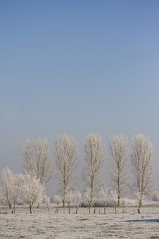 Free Frosty Winter Scenery Royalty Free Stock Photography - 15958167