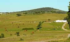 Free A Herd Of Cows Pasturing In A Farm Stock Photography - 15958332