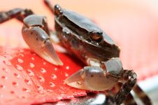Free Crab Stock Photography - 15959062