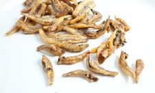 Free Dried Tiny Fishes Stock Images - 15959404