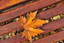 Free Fall Leaves Stock Images - 15959664