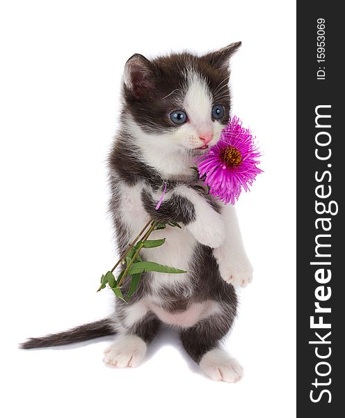 Kitten hold flowers