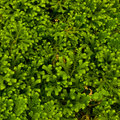 Free Green Moss Royalty Free Stock Photography - 15961387
