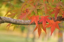 Free Autumn Leaves Royalty Free Stock Photography - 15960687