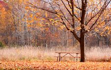 Free Autumn In The Park Royalty Free Stock Images - 15961559