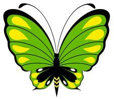 Free Beautiful Butterfly Stock Photo - 15961580