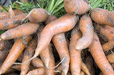 Free Carrots Royalty Free Stock Images - 15962569