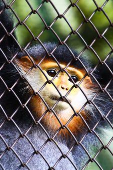 Free Monkey And Hope Freedom Stock Images - 15962624