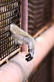 Free Monkey And Hope Freedom Royalty Free Stock Photography - 15962717