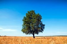 Free Loneliness Stock Photography - 15963112
