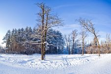 Free Winter Landscape Stock Images - 15963224