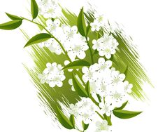 Free Blossoms Illustration Stock Photos - 15967443