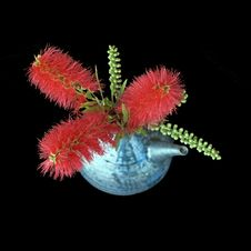 Free Bright Red Bottlebrush Bouquet Royalty Free Stock Photo - 15967665