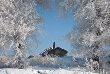Free Winter Rime Royalty Free Stock Photography - 15968007