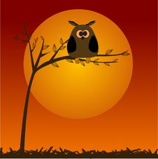 Free Cute Owl On The Tree Royalty Free Stock Photo - 15968815