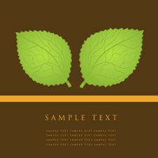 Free Green Leaves Card. Royalty Free Stock Photos - 15969178