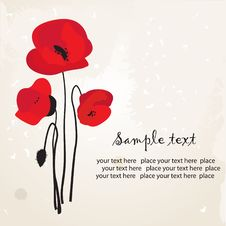 Free Red Poppy Royalty Free Stock Photos - 15969968