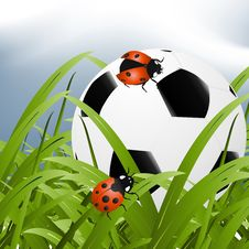 Free Ball Between Grass Stock Images - 15971914
