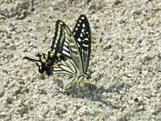 Free Butterfly On The Ground Stock Image - 15971931