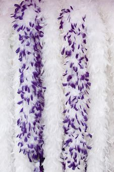 Free Purple Boa,s Royalty Free Stock Images - 15973729